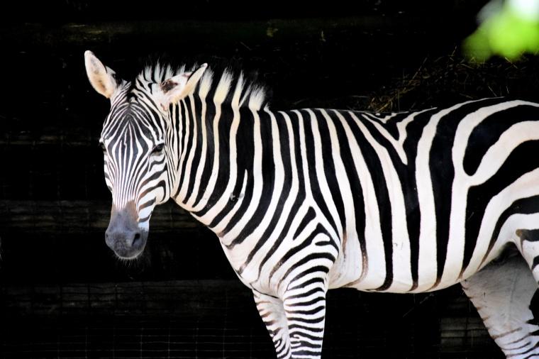 zoo16